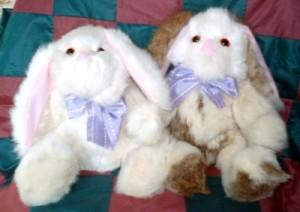 SA bunnies01b