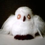SA white owl